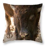 Waco Texas Buffalo Nose Drip Throw Pillow