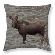 Yearling Moose In The Shoshone River   #1284 Throw Pillow