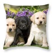Yellow And Black Labrador Puppies Throw Pillow