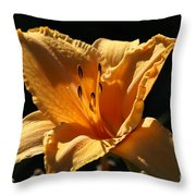 Yellow And Cream Day Lily Throw Pillow