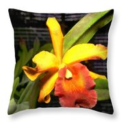 Yellow And Orange Cattleya In The Hothouse Throw Pillow