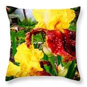 Yellow And Purple Iris Throw Pillow