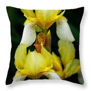 Yellow And White Irises Throw Pillow