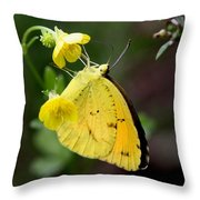 Yellow And Yellow Sulphur Butterfly Throw Pillow