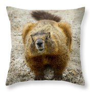 Yellow-bellied Marmot   #5300 Throw Pillow