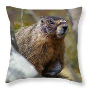 Yellow-bellied Marmot Throw Pillow