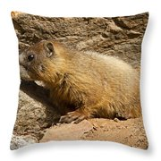 Yellow Bellied Marmot Checking Out The Neighborhood In Rocky Mountain National Park Throw Pillow