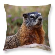 Yellow Bellied Marmot Throw Pillow
