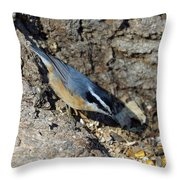 Yellow Bellied Nuthatch Throw Pillow