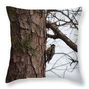 Yellow Bellied Sapsucker In The Pine Throw Pillow