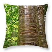 Yellow Birch Near La Chute In Forillon Np-qc Throw Pillow