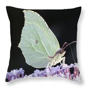 Yellow Brimstone Throw Pillow