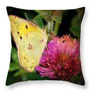 Yellow Butterfly On Pink Clover Throw Pillow