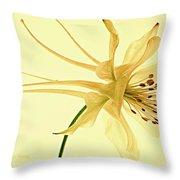 Yellow Columbine Study  Throw Pillow