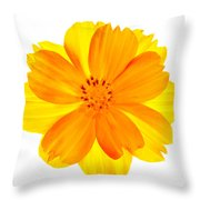 Yellow Cosmos Throw Pillow