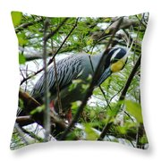 Yellow Crowned Night Heron In Display Throw Pillow