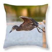 Yellow-crowned Night-heron Portrait Series 7 Throw Pillow