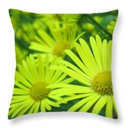 Yellow Daisies Close-up Throw Pillow
