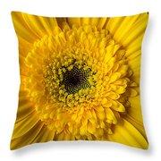 Yellow Daisy Close Up Throw Pillow