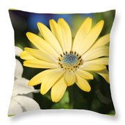 Yellow Daisy With Boarder Throw Pillow