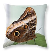 Yellow-edged Giant Owl Butterfly #3 Throw Pillow