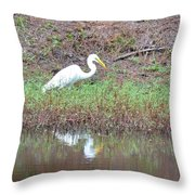 Yellow-eyed Beauty Throw Pillow