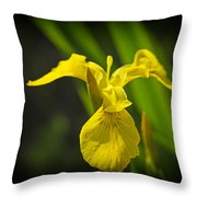 Yellow Flag Flower Outdoors Throw Pillow