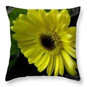 Yellow Gerbera Daisy  Throw Pillow