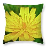 Yellow Hawkweed - Hieracium Caespitosum  Throw Pillow