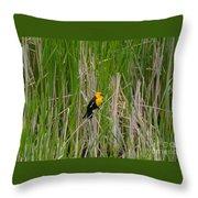 Yellow Headed Blackbird Throw Pillow
