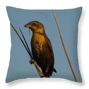 Yellow-headed Blackbird With Dragonfly Throw Pillow