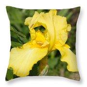 Yellow Iris With Tiny Pinch Bug Throw Pillow