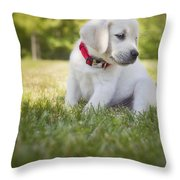 Yellow Lab Puppy In The Grass Throw Pillow