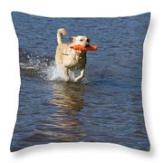 Yellow Lab Retrieving Toy Throw Pillow by Linda Freshwaters Arndt