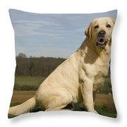 Yellow Labrador Dog Throw Pillow