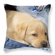 Yellow Labrador Puppy In Jeans Throw Pillow