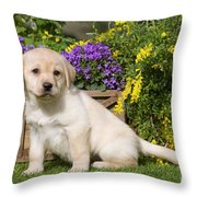Yellow Labrador Puppy Throw Pillow