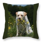 Yellow Labrador Retriever Dog Smelling Yellow Flowers  Throw Pillow