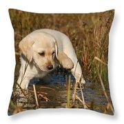 Yellow Labrador Retriever Puppy Standing In Water Throw Pillow