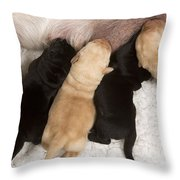 Yellow Labrador Suckling Puppies Throw Pillow