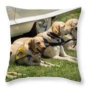 Yellow Labs In Training Throw Pillow
