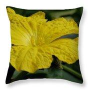 Yellow Luffa Blossom Throw Pillow