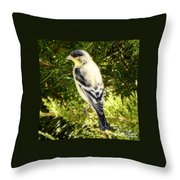 Yellow N Black Finch Throw Pillow