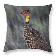 Yellow-necked Francolin... Throw Pillow