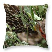Yellow-necked Spurfowl Throw Pillow