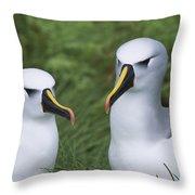 Yellow-nosed Albatross Pair Gough Island Throw Pillow