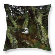 Yellow-nosed Albatrosses In Ferns Throw Pillow