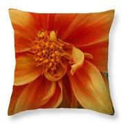 Yellow Orange Dahlia Throw Pillow
