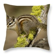 Yellow Pine Chipmunk Throw Pillow