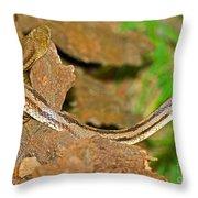 Yellow Rat Snakes Throw Pillow